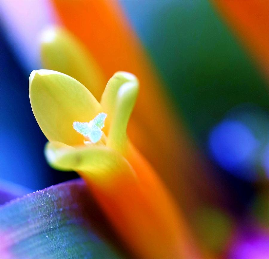 Flower Photograph - Feelings by Mitch Cat