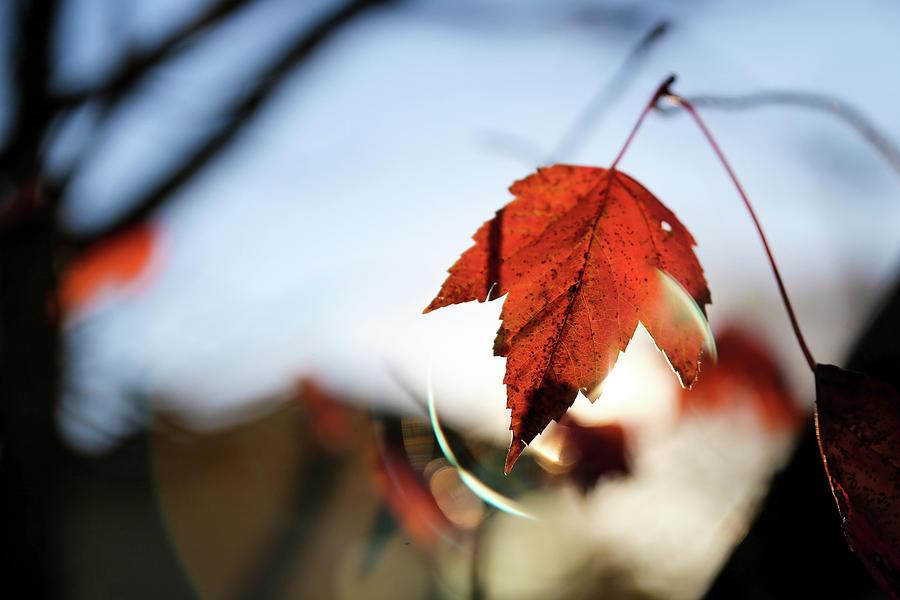 Feels Like fall by Lora Lee Chapman