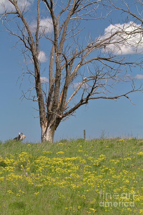 Pawnee Grasslands Photograph - Feet Of Gold by Jim Garrison