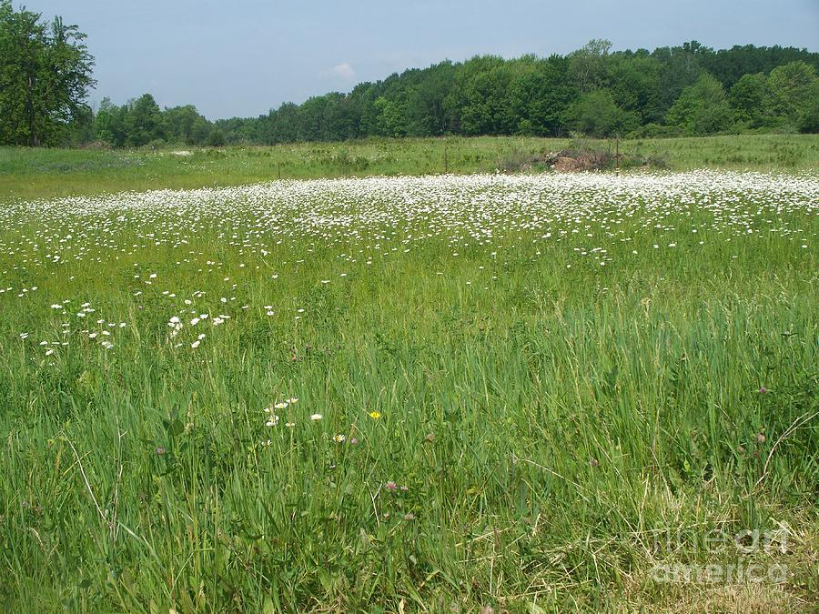 Field Photograph - Feild Of White by Sacred  Muse