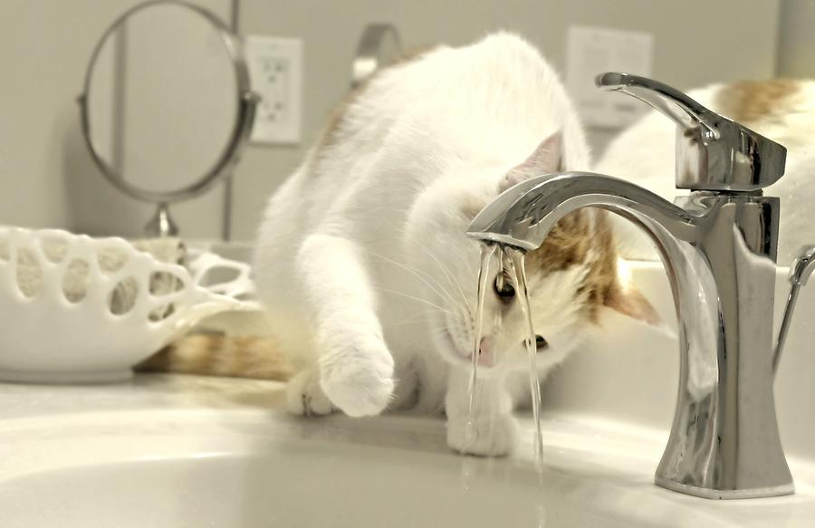 Feline Faucet Photograph by Diana Angstadt