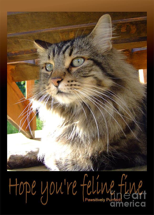 Feline fine by Marianne NANA Betts