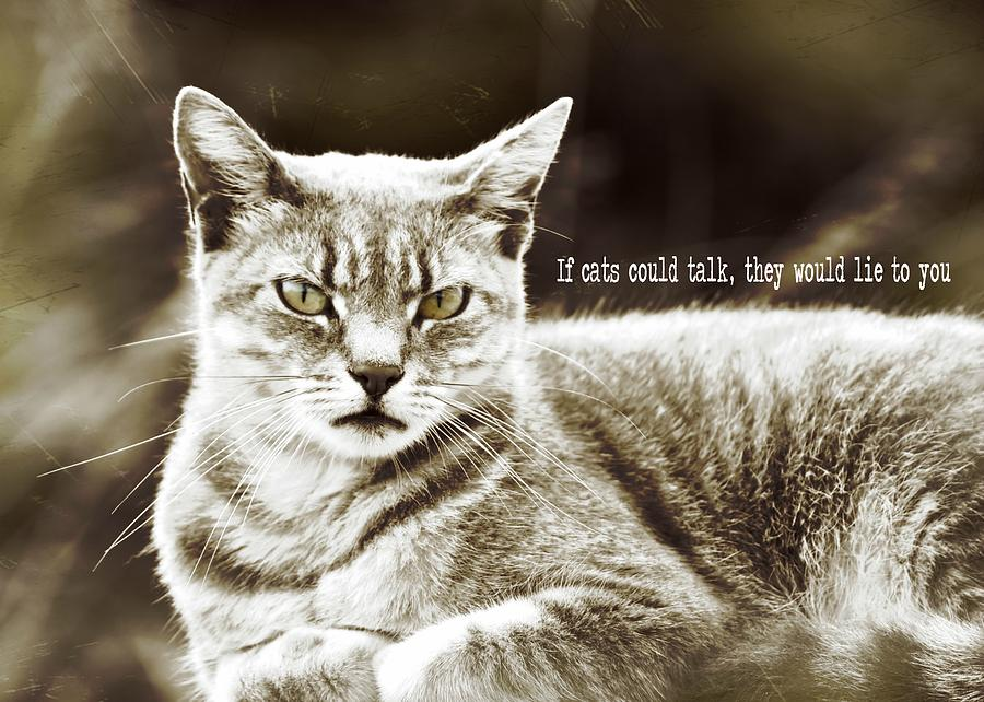 Cat Photograph - Feline Moment Quote by JAMART Photography