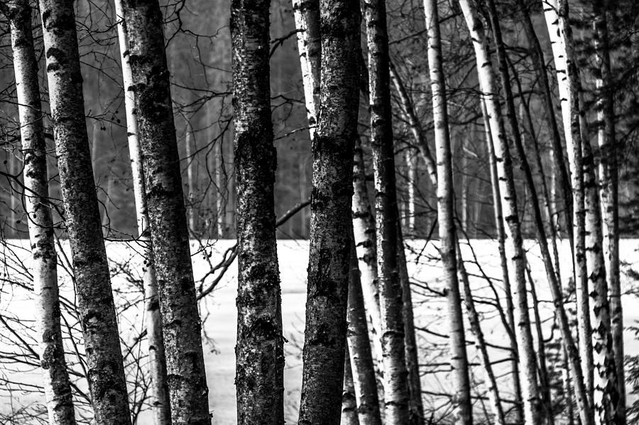 Matti Ollikainen Photograph - Fellows by Matti Ollikainen