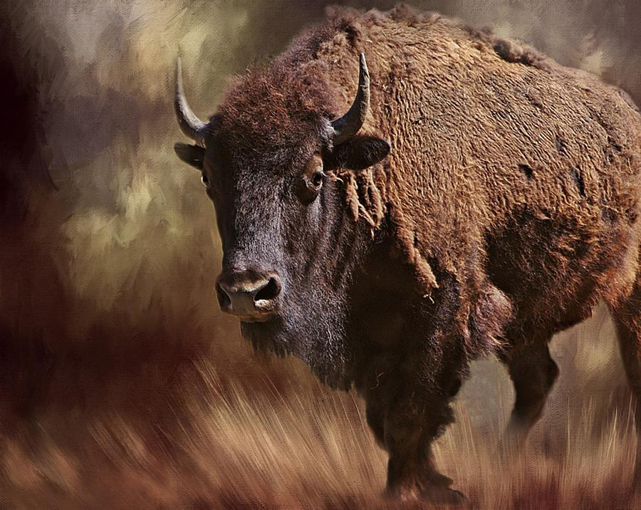 Buffalo Photograph - Female Buffalo by Stephanie Calhoun