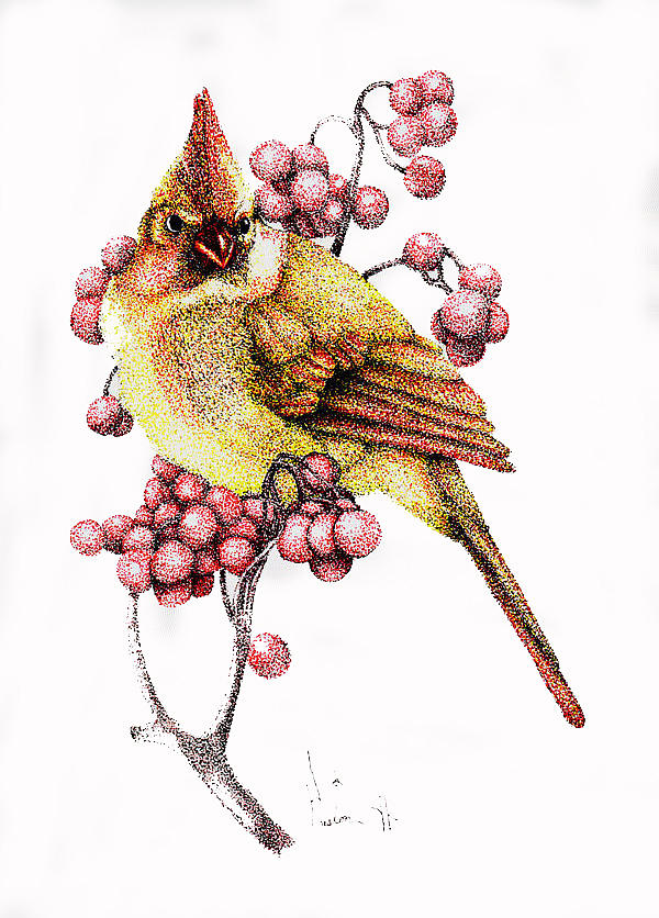 Wild Life Drawing - Female Cardinal by Preston Shupp