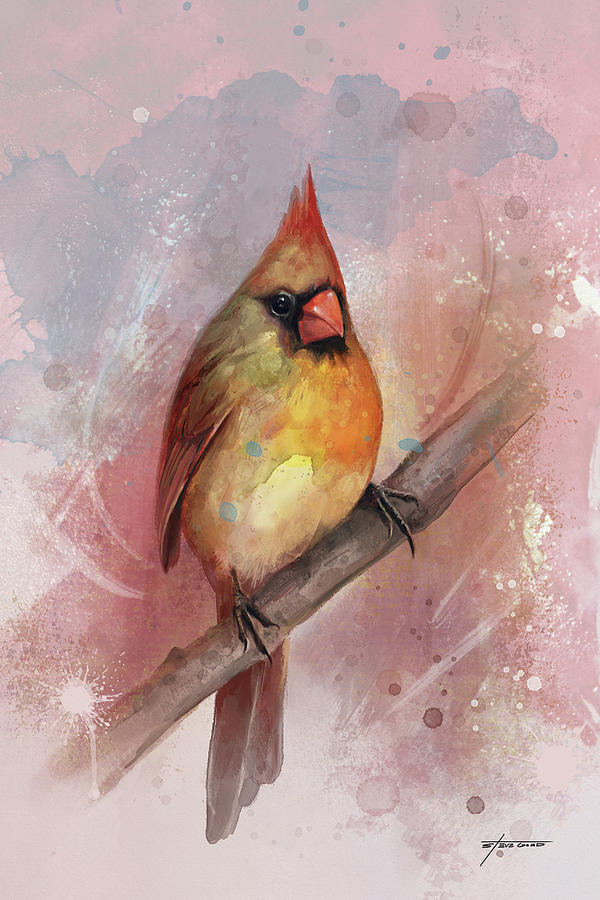 Female Cardinal by Steve Goad