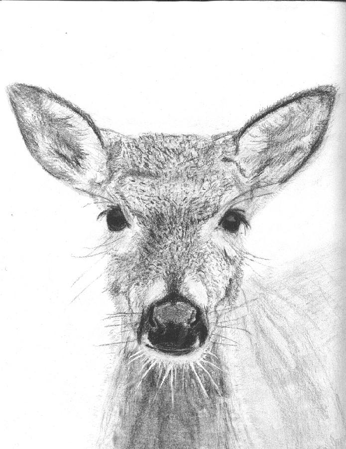 Deer Drawing - Female White-tailed Deer by Marqueta Graham