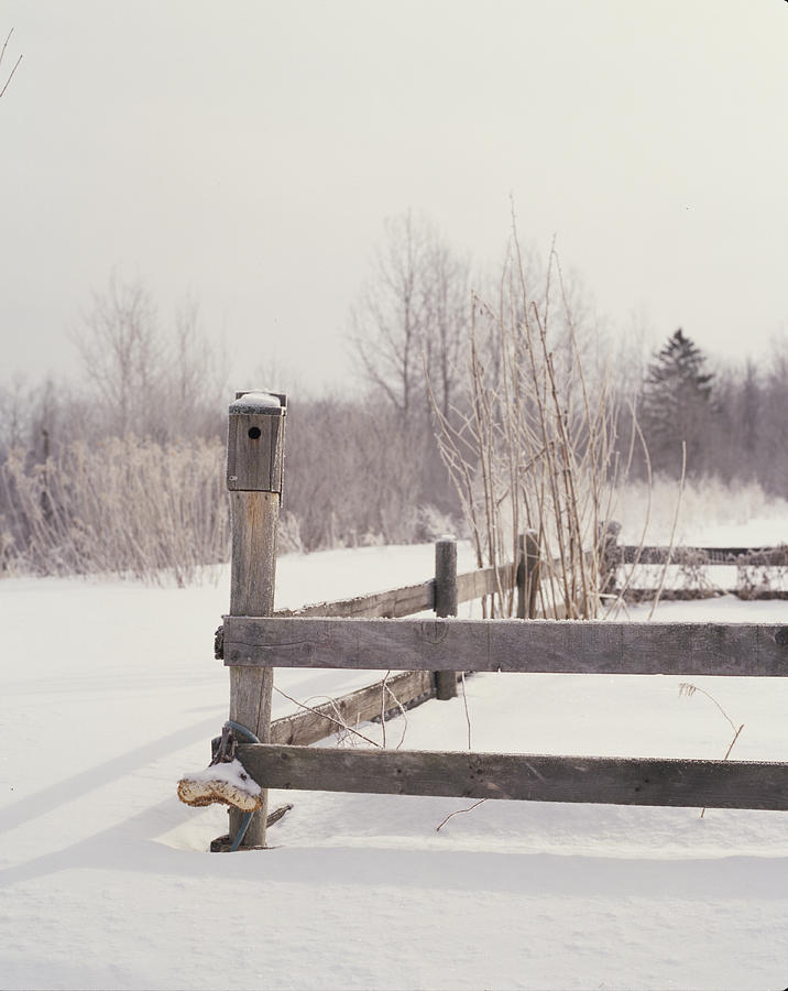 Birdhouse Photograph - Fence And Birdhouse In The Snow by Gillham Studios