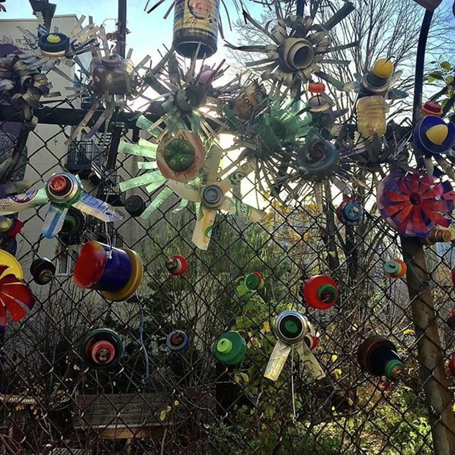 Fence Decorations Surrounding A Photograph by Gina Callaghan