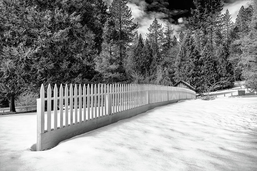 Malakoff Diggins Photograph - Fence in the Woods by Robin Mayoff