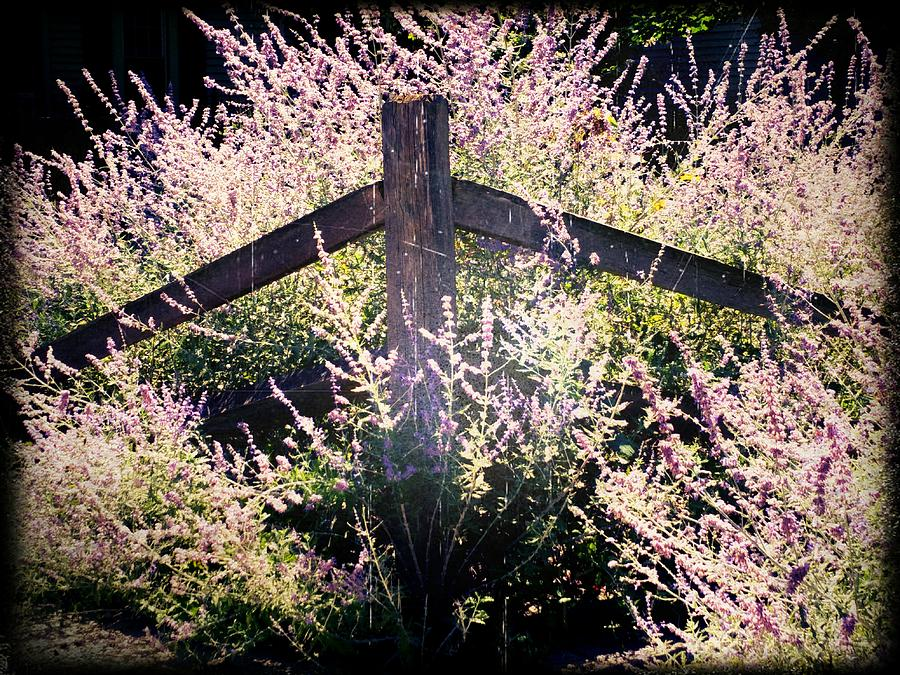 Fence Post in Sun by Michael L Kimble