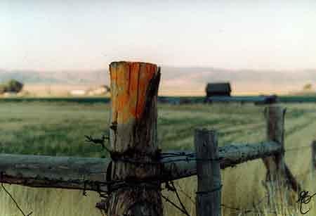 Fence Post Photograph by Jon Noah