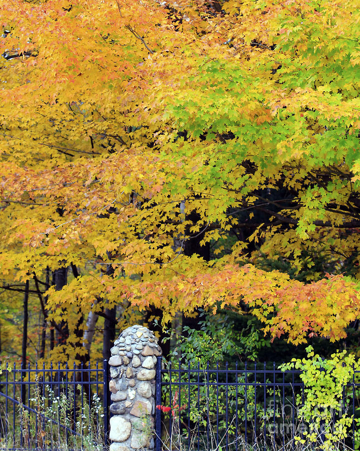 Fall Photograph - Fenced In Color by Kathy DesJardins