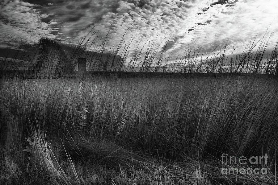 Fenceline by William Fields