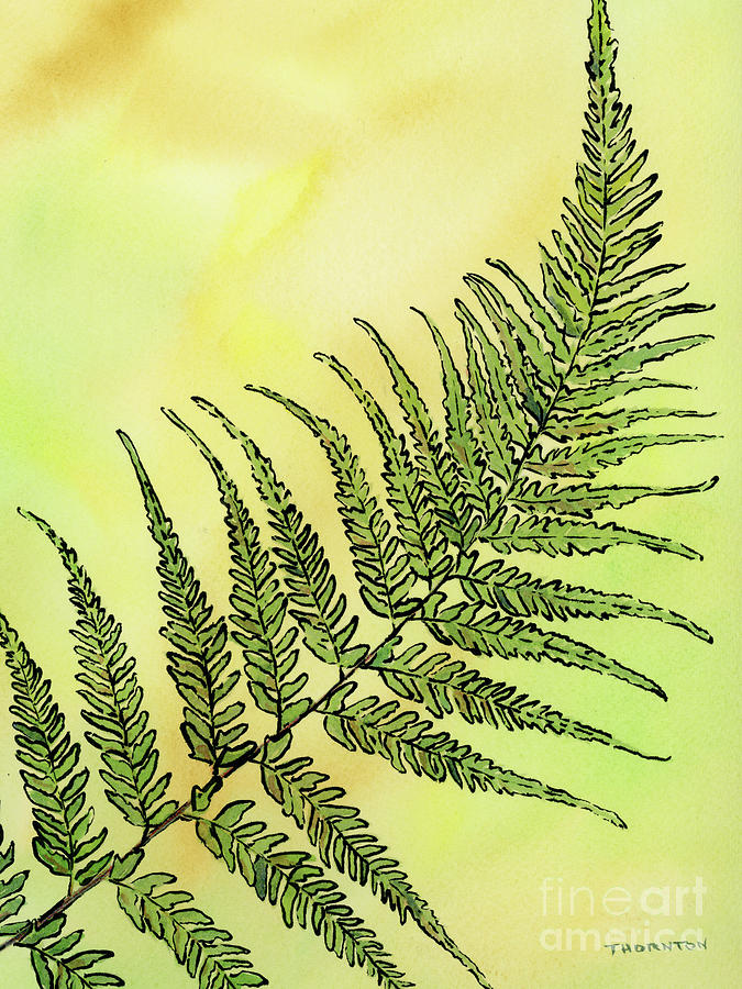 Fern 1 by Diane Thornton