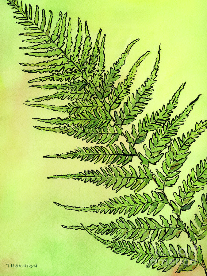 Fern 2 by Diane Thornton