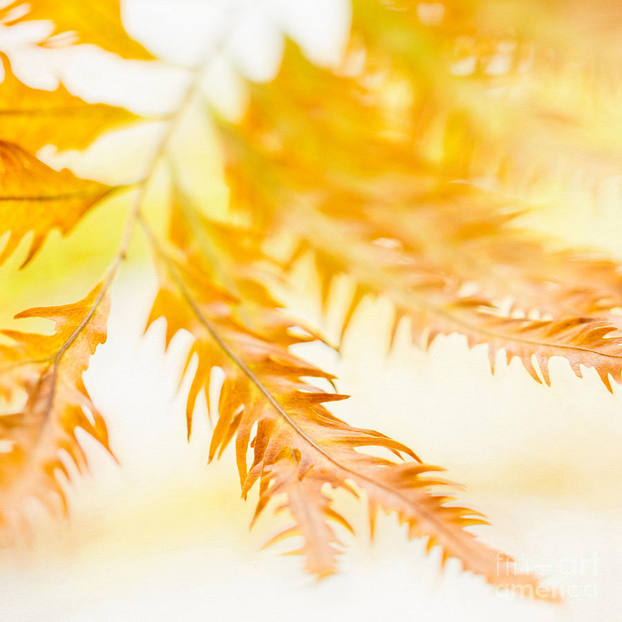 Botanic Gardens Photograph - Fern Fantasy by Marilyn Cornwell