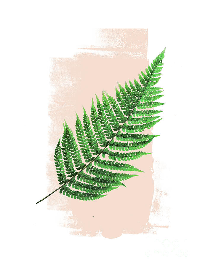 Fern Leaf on Pink by EMANUELA CARRATONI