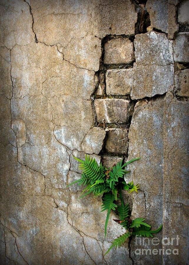 Fern Photograph - Fern Life by Perry Webster