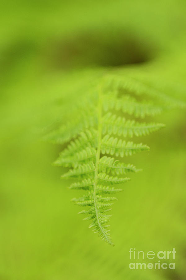 Fern Opening Photograph