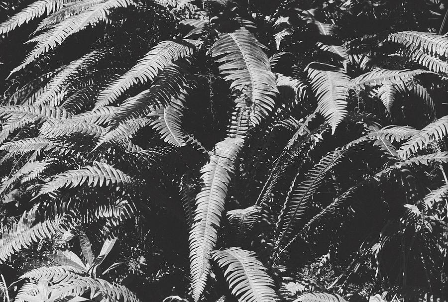 Fern Photograph - Fern Paradise  by Mason Julian