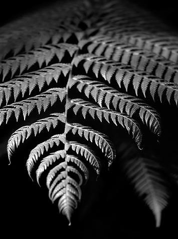 Leaf Photograph - Fern by William Love