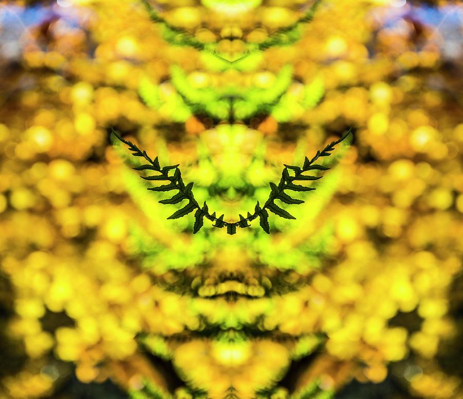 Fern Photograph - Fern Wings by Pelo Blanco Photo