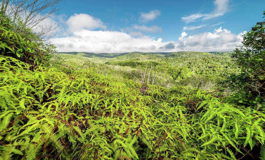Ferns for Days by T Brian Jones