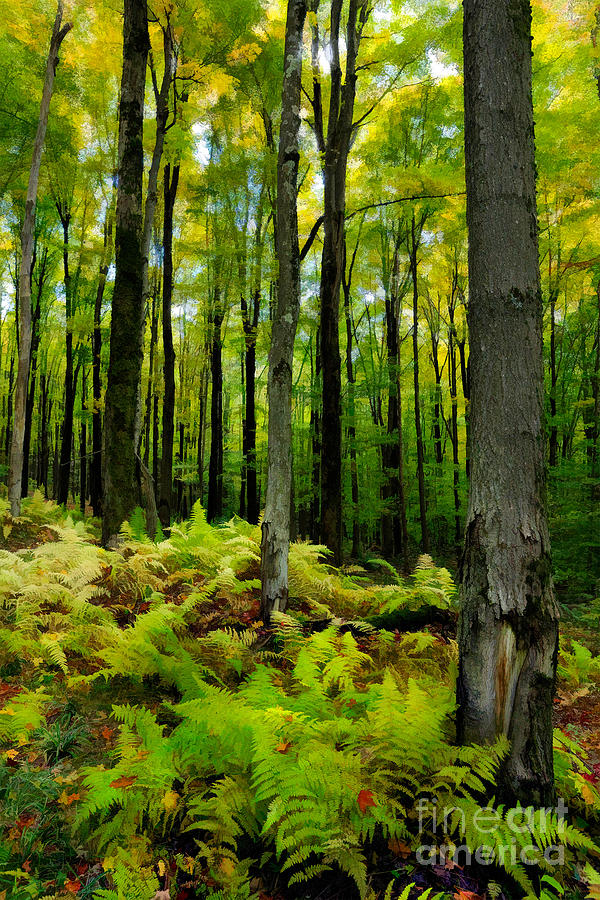 Ferns Photograph - Ferns In The Forest - West Virginia by Dan Carmichael