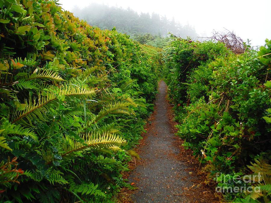Ferns On The Oregon Trail by Paddy Shaffer