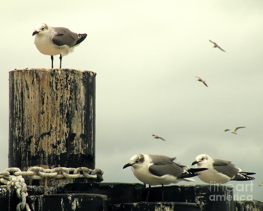 Ferry Photograph - Ferry Hypnosis by Joe Jake Pratt