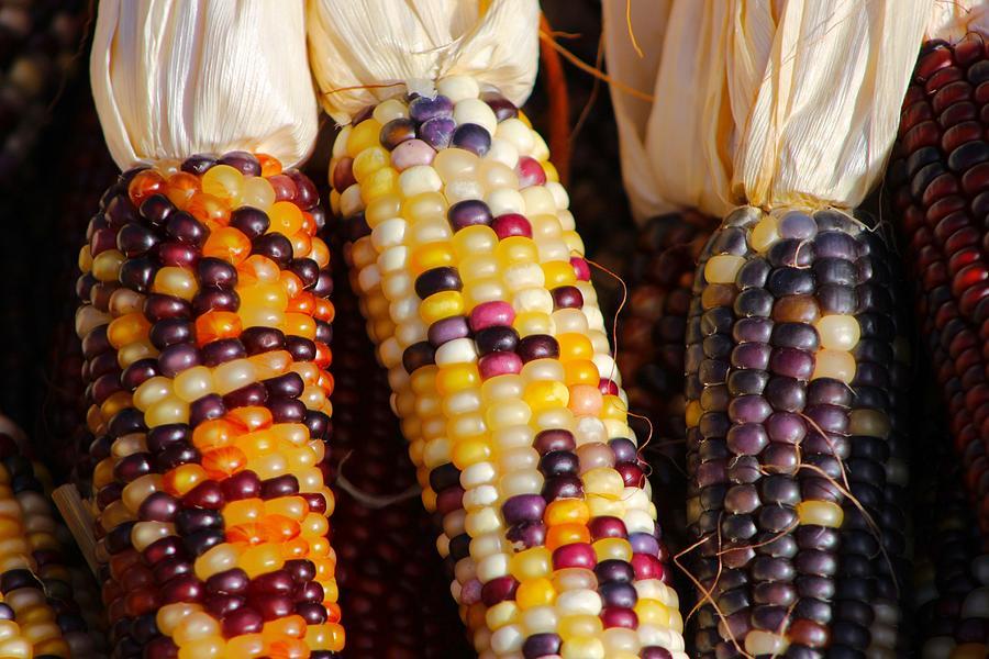 Festive Corn Photograph