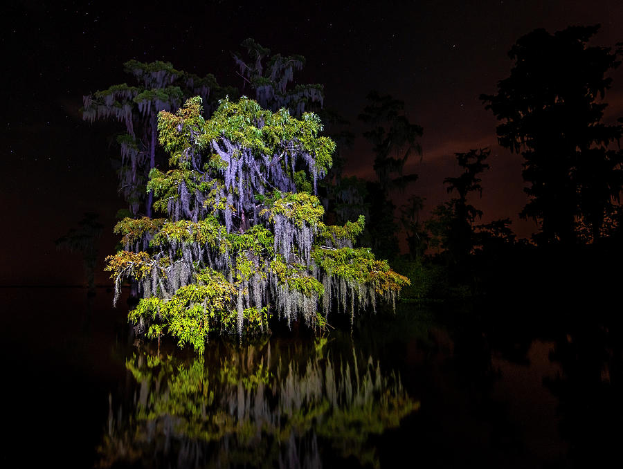 Festooned cypress tree by Andy Crawford