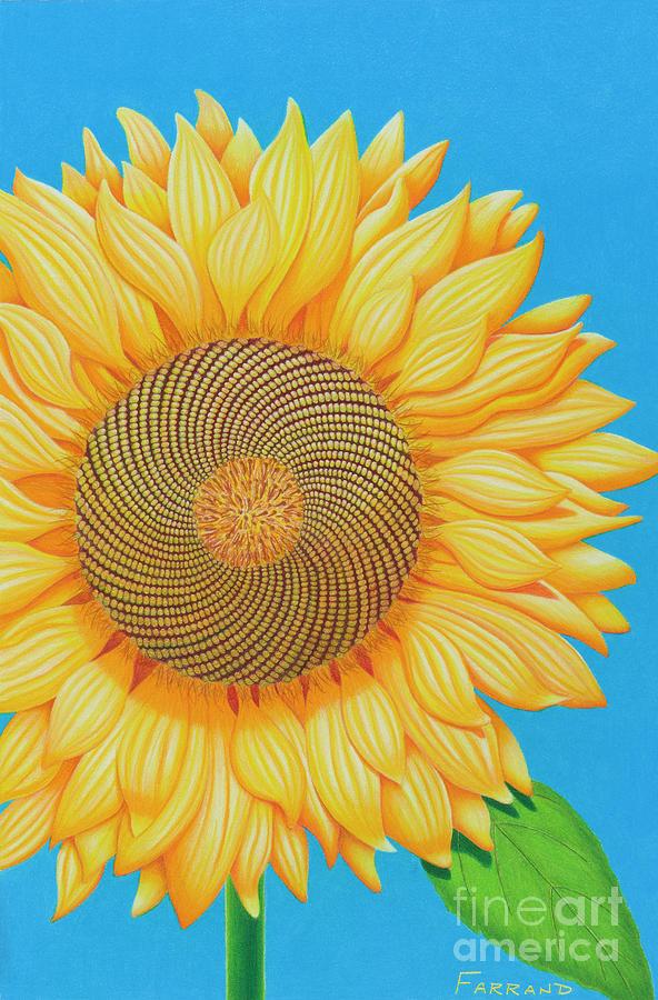 fibonacci flower painting by tracy farrand