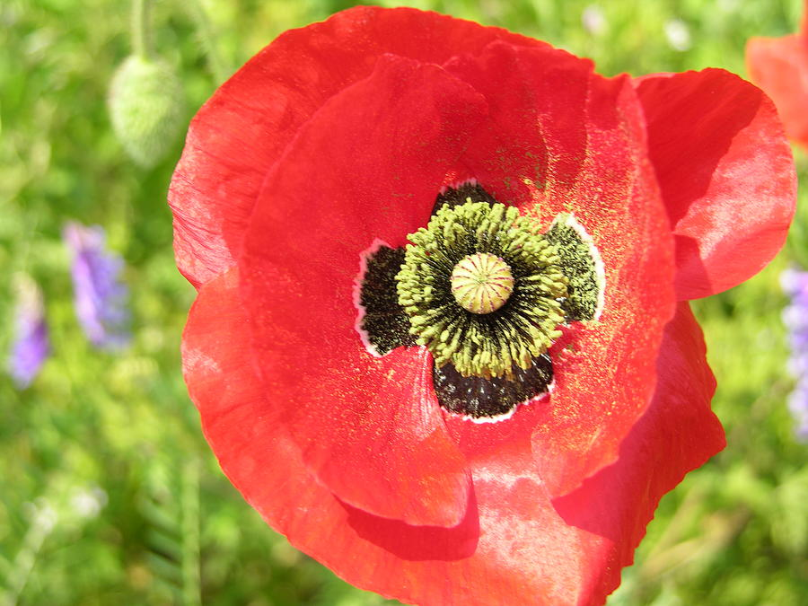 Poppies Photograph - Field Flowers 3 by Ladonna Idell