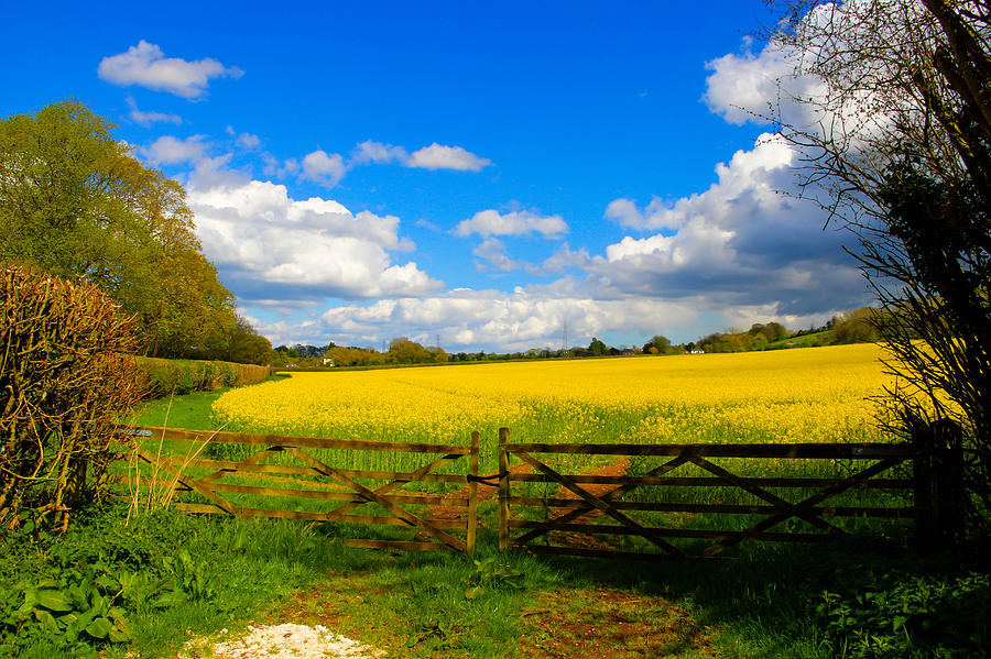 Southern England Photograph - Field in April by Peggy Berger