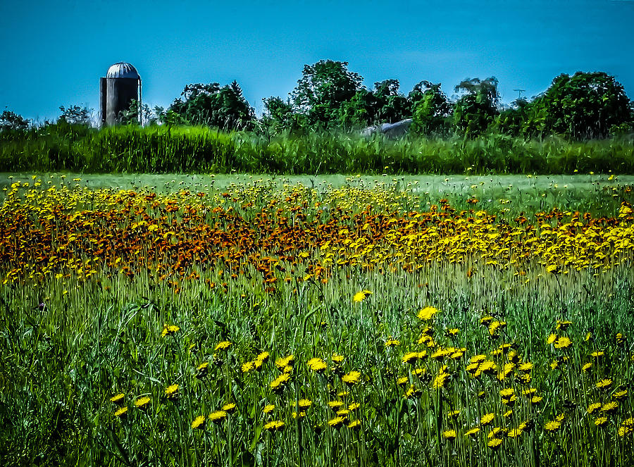Field in June by Terry Ann Morris