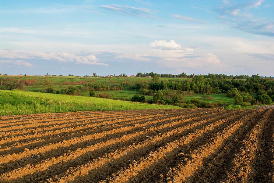Field Photograph - Field by Konstantin Bibikov