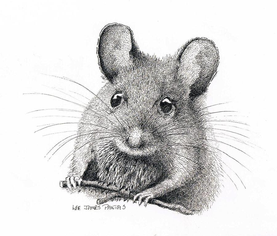Mouse Drawing - Field Mouse or Meadow Vole by Lee Pantas