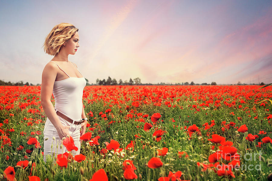 Field Of Dreams Photograph