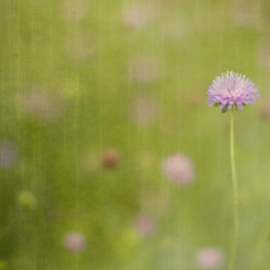 Field Of Dreams II Photograph