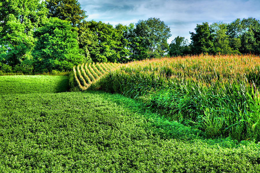 Cornfield Photograph - Field Of Dreams Iv by Steven Ainsworth