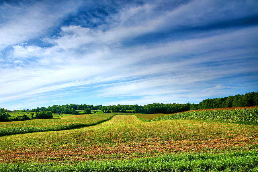 Field Photograph - Field Of Dreams Two by Steven Ainsworth