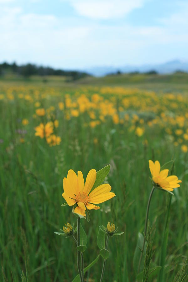 Flowers Photograph - Field Of Flowers by Christopher Larimore