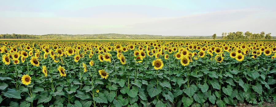 Field of Flowers by Cricket Hackmann
