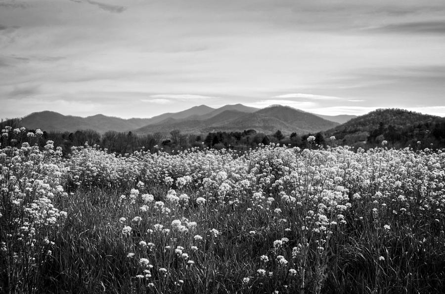 Field Of Flowers In Black And White Photograph by Greg Mimbs