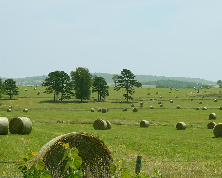 Hay Photograph - Field Of Forever by Sandra Collins