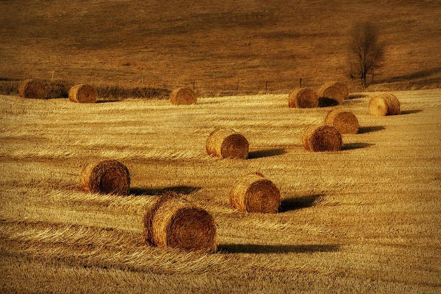 Hay Bales Photograph - Field Of Gold #1 by Nikolyn McDonald