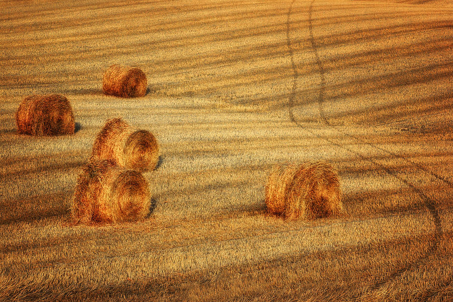 Agricultural Photograph - Field Of Gold #3 by Nikolyn McDonald
